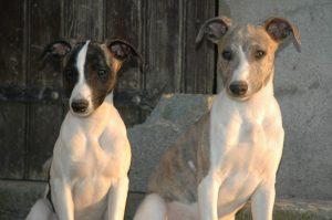 éducation chiots et chiens par éducateur canin