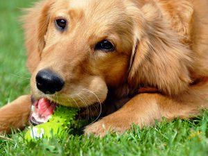 comportement du chien : trouble ou problème ?