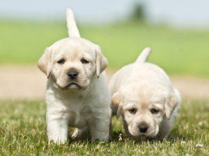 éduquer chiot et chien