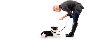 éduquer son chien pour éviter des troubles du comportement du chien
